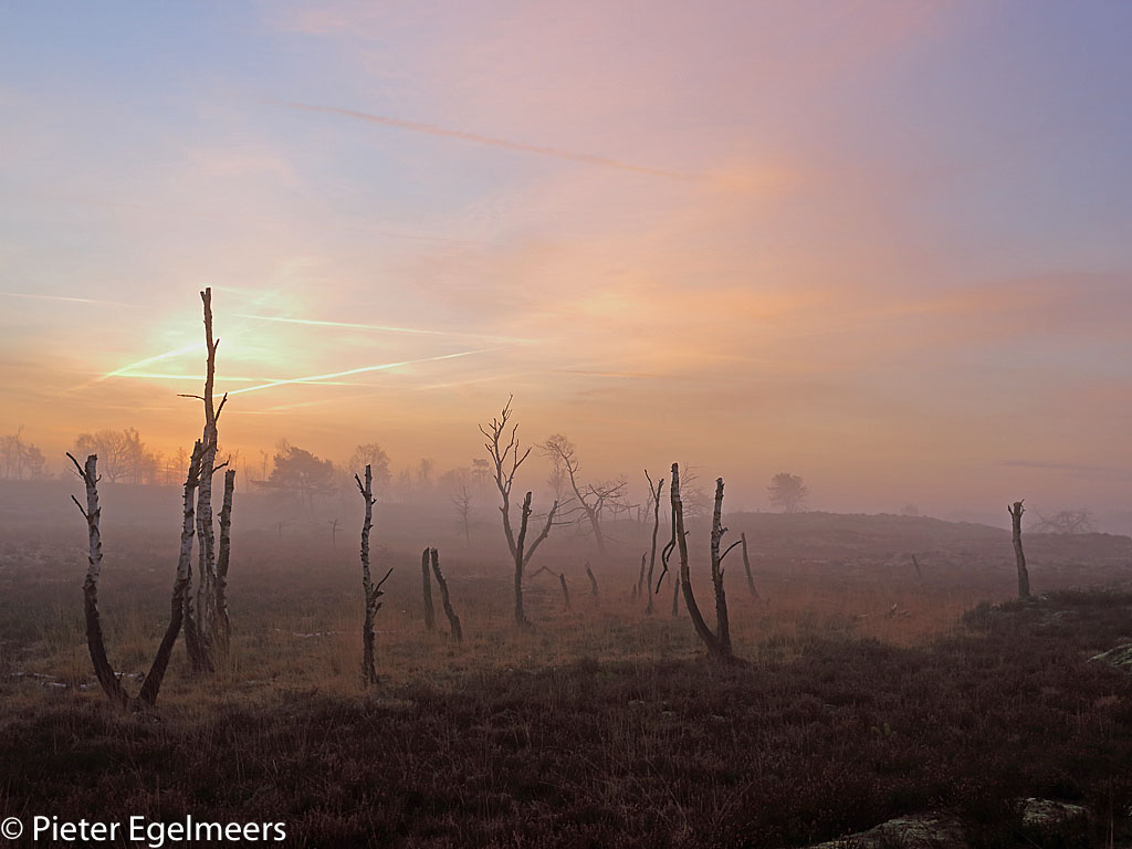 Gebieden fotograferen Natuurfotografie.nl:Kalmthoutse Heide