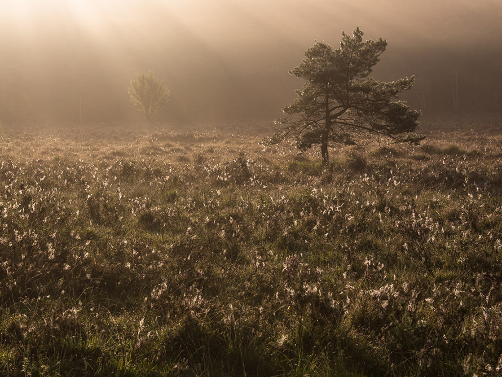 Gebieden fotograferen Natuurfotografie.nl:Brunssummerheide