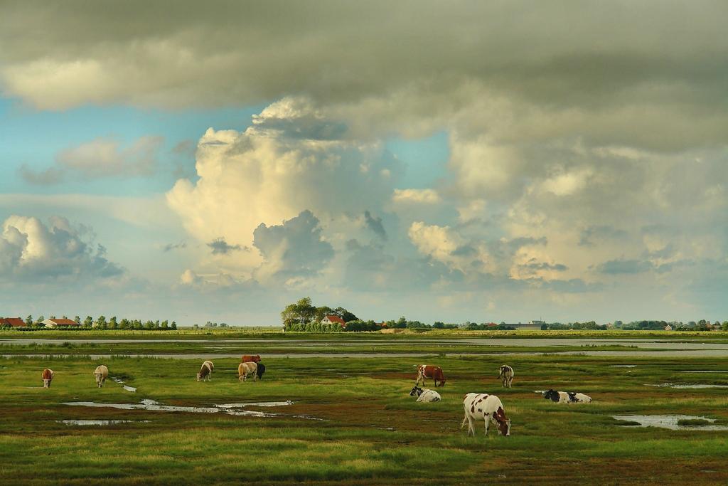 Gebieden fotograferen Natuurfotografie.nl:Plan Tureluur, zuidkust Schouwen-Duiveland