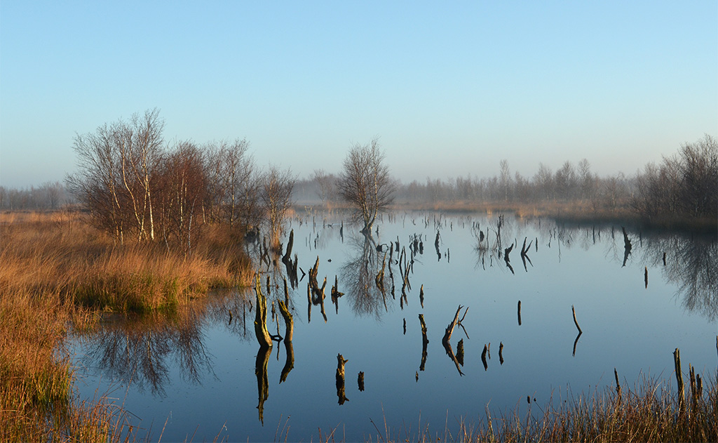 Gebieden fotograferen Natuurfotografie.nl:Bargerveen
