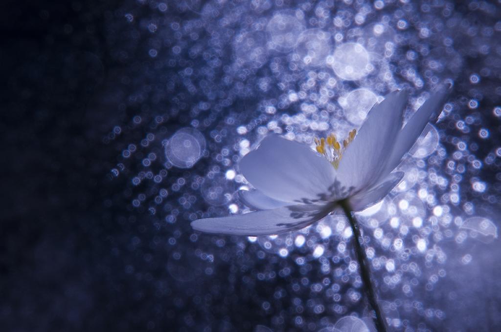 In starlight
