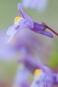 Wanneer je een uitstekende bloem van opzij fotografeert, zal de achtergrond bestaan uit de bloemen die er naast groeien. - Fotograaf: Antonie Blom