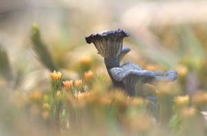 Blauwgroen trechtertje vanaf laag standpunt genomen. - Fotograaf: Ron Poot