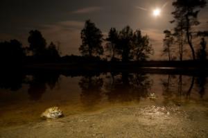 Sfeerbeeld van de voortplantingsplaats bij maanlicht. De voorgrond is belicht met een zwakke zaklamp.  - Fotograaf: Paul van Hoof