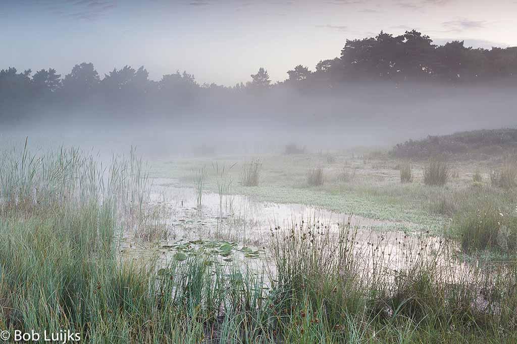 Gebieden fotograferen Natuurfotografie.nl:Beegderheide