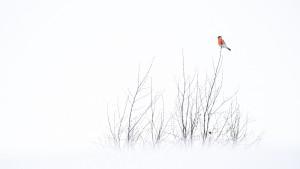 Het is een fotografische uitdaging de vogel mooi in het landschap te plaatsen. - Fotograaf: Jeffrey van Houten