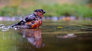 Van een bad word je niet mooier... - Fotograaf: Jeffrey van Houten