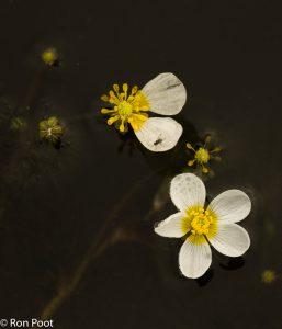 Bovenaanzicht, compositie met twee bloemen. - Fotograaf: Ron Poot