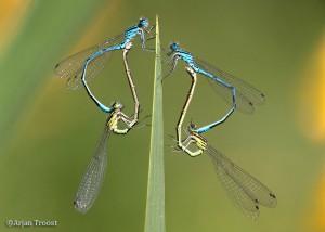 Een dubbele tandem! - Fotograaf: Arjan Troost