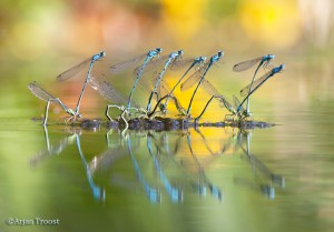 - Fotograaf: Arjan Troost