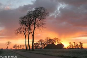 licht iepen zonsopkomst