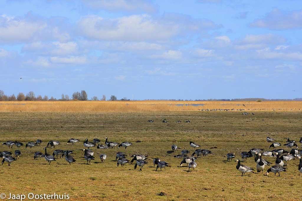 Gebieden fotograferen Natuurfotografie.nl:Lauwersmeer