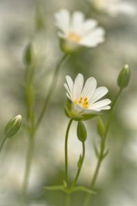 Compositie met twee bloemen - Fotograaf: Ron Poot