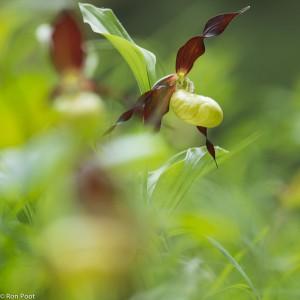 Creatieve benadering: door de bloemen heen fotograferen.  - Fotograaf: Ron Poot