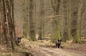 Een rotte op een bospad in het vroege voorjaar. - Fotograaf: Els Branderhorst