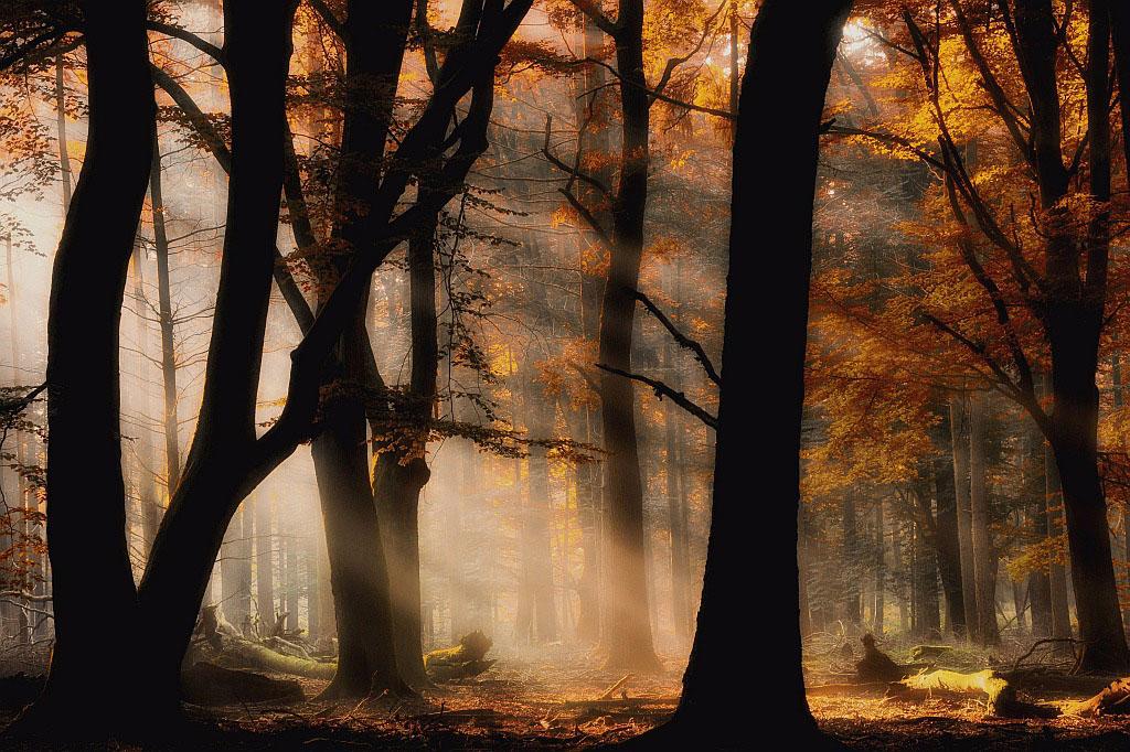 Gebieden fotograferen Natuurfotografie.nl:Speulder en Sprielderbos