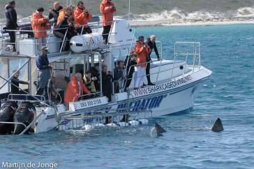 MDJ6211M-Kooiduiken bij haaien in Zuid Afrika
