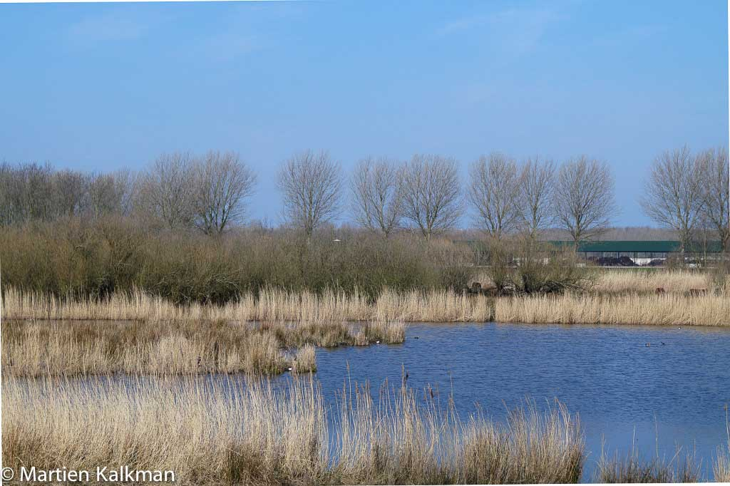 Gebieden fotograferen Natuurfotografie.nl:Bieslandse Bos en Delftse Hout