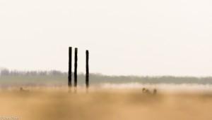 Door de luchttrillingen boven de zandplaat ontstaan vervormingen in het beeld die een vervreemdend effect opleveren. - Fotograaf: Ron Poot