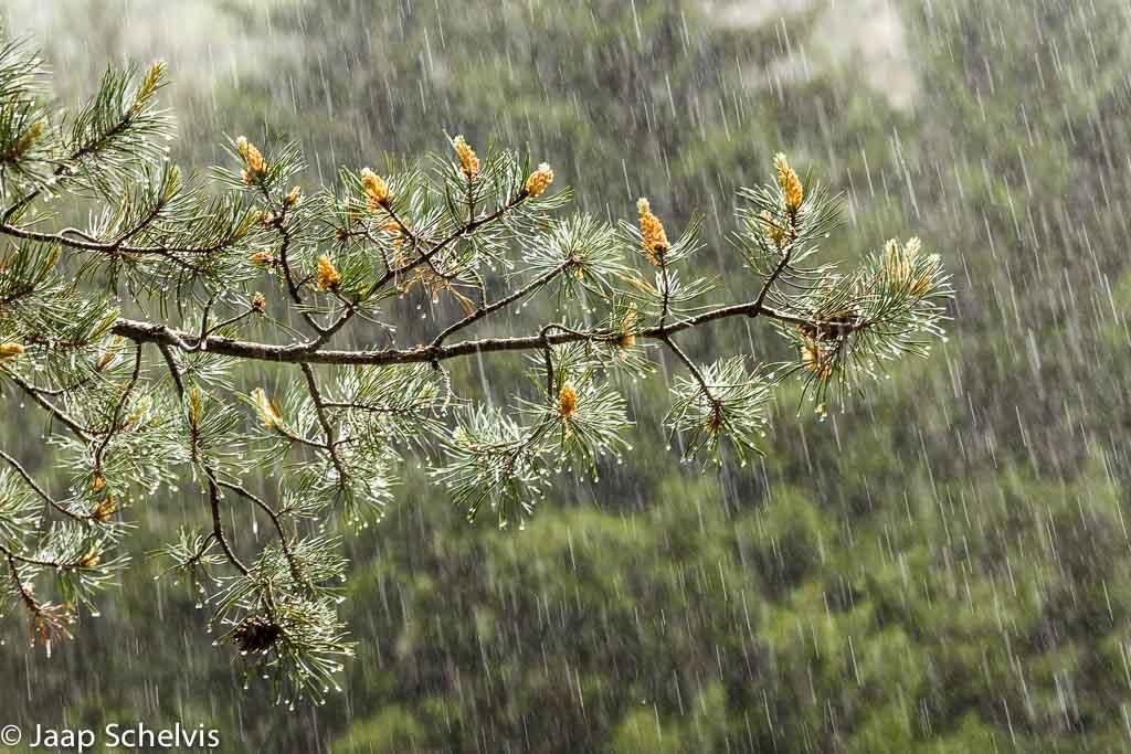 Fotografeer deze week eens… regen