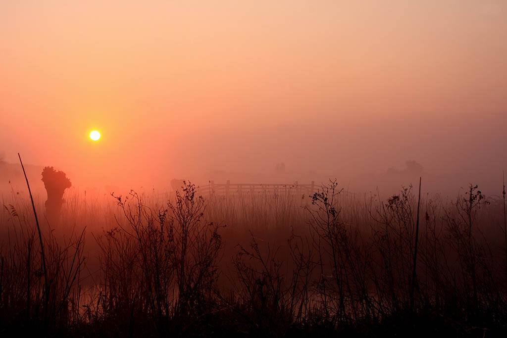 Gebieden fotograferen Natuurfotografie.nl:Het Twiske