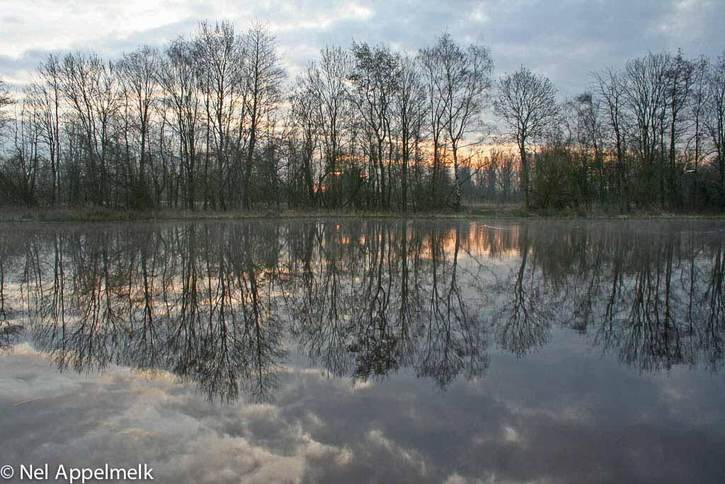 Gebieden fotograferen Natuurfotografie.nl:Beekbergerwoud