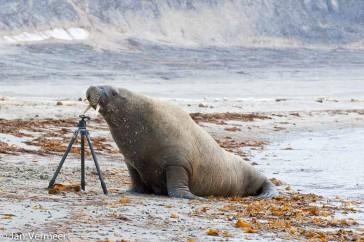 copyrightJV walrus-met-statief