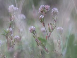 Een groepje bloemen, op zandgrond in een natuurontwikkelingsterrein. Registratiefoto, waarbij de bloemen in de achtergrond bij het beeld betrokken zijn.