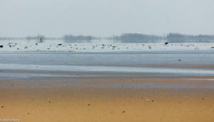 Luchtspiegeling boven de waddenzee. Door het koele water en de warmere lucht wordt de overkant een stukje opgetild.  - Fotograaf: Ron Poot