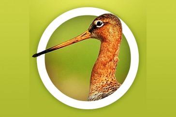 vogelsinnederlandlogo