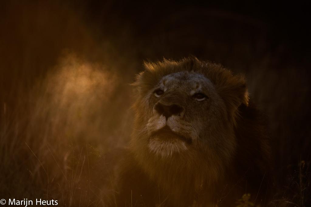 Wereld leeuwendag