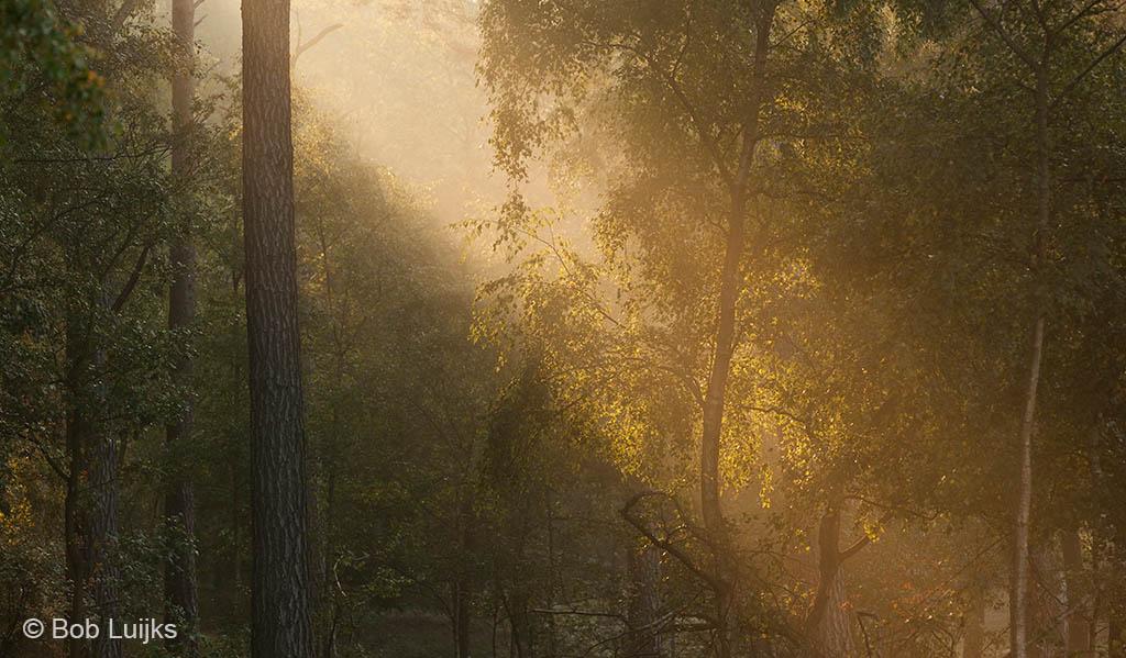 Gebieden fotograferen Natuurfotografie.nl:Boswachterij Dorst