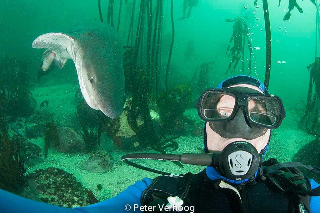 Peter Verhoog maakt uniek beeld met haai