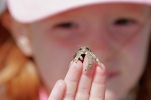 Ook voor kinderen zijn heremietkreeftjes heel boeiend om te bekijken.