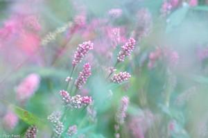 Bloeiende planten. - Fotograaf: Ron Poot