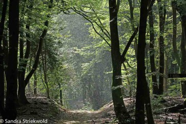 Regen en zonneschijn in bos; rain and sunshine in forest