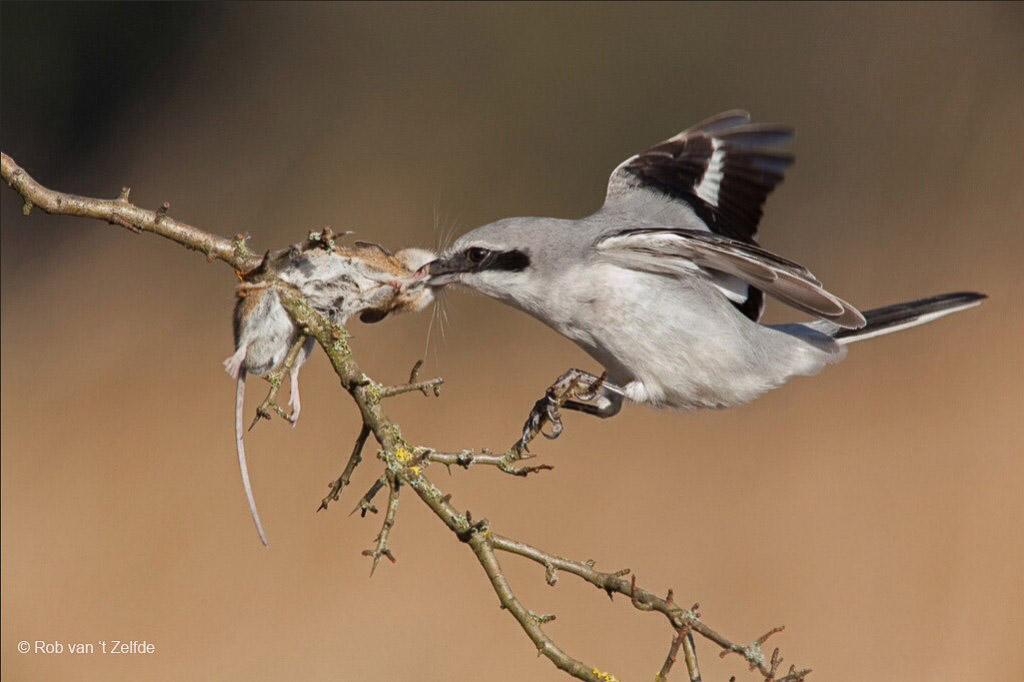 10 favoriete vogelsoorten op dé verlanglijst!