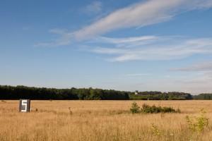 Als je een Grote groene sabelsprinkhaan hoort, dan zit hij in het ruigere plukje aan de rechterkant. Mannetjes zoeken graag zangposten op hoogte. - Fotograaf: Mark van Veen
