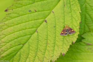 Compositie waarbij de vlinder maar klein in beeld is. - Fotograaf: Ron Poot