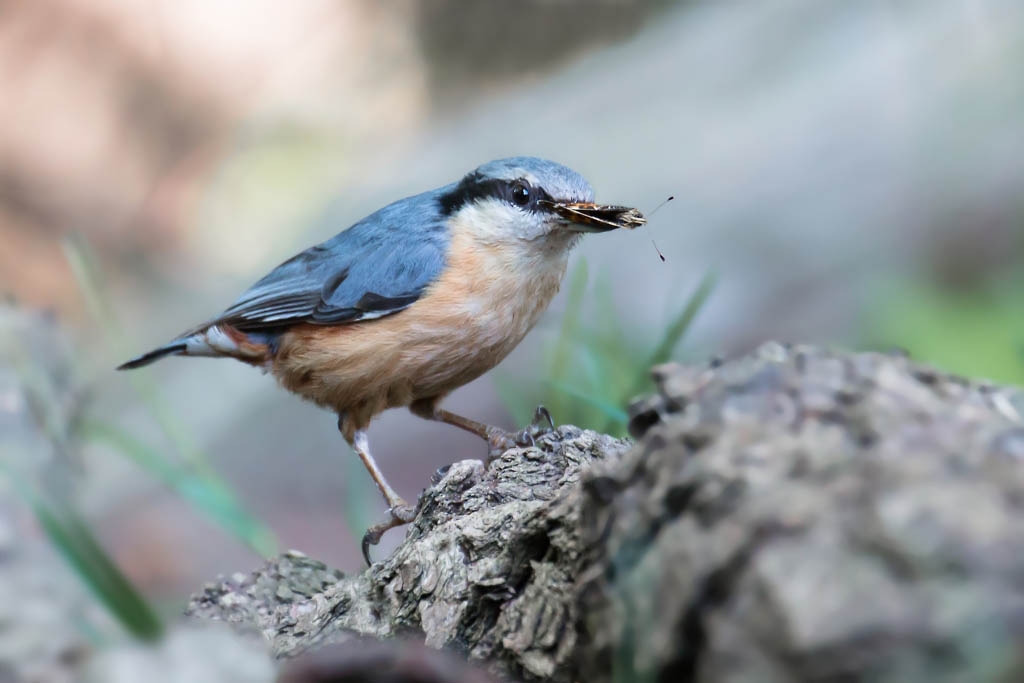 Gebieden fotograferen Natuurfotografie.nl:Landgoed de Horte