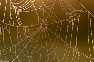 Tegenlicht opname van een spinnenweb met ochtenddauw. - Fotograaf: Ron Poot