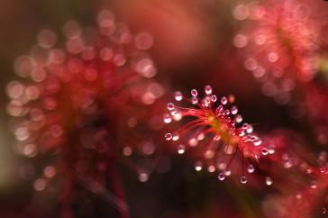astrid-brenninkmeijer-natuurfotografie-thema-rood