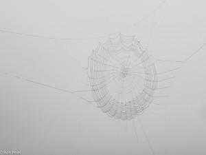 Wielweb met dauwdruppels in  dichte mist. Door de mistige achtergrond toont het web donker in plaats van licht.  - Fotograaf: Ron Poot