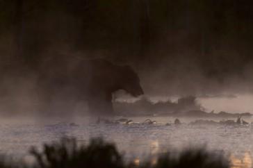 beer meertje avondmist nacht