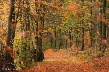 Bob_Luijks-herfst