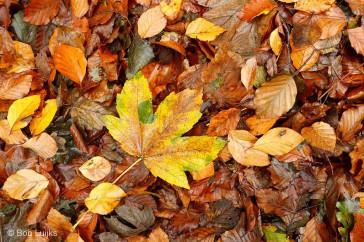 Bob_Luijks-herfstkleuren_polarisatiefilter