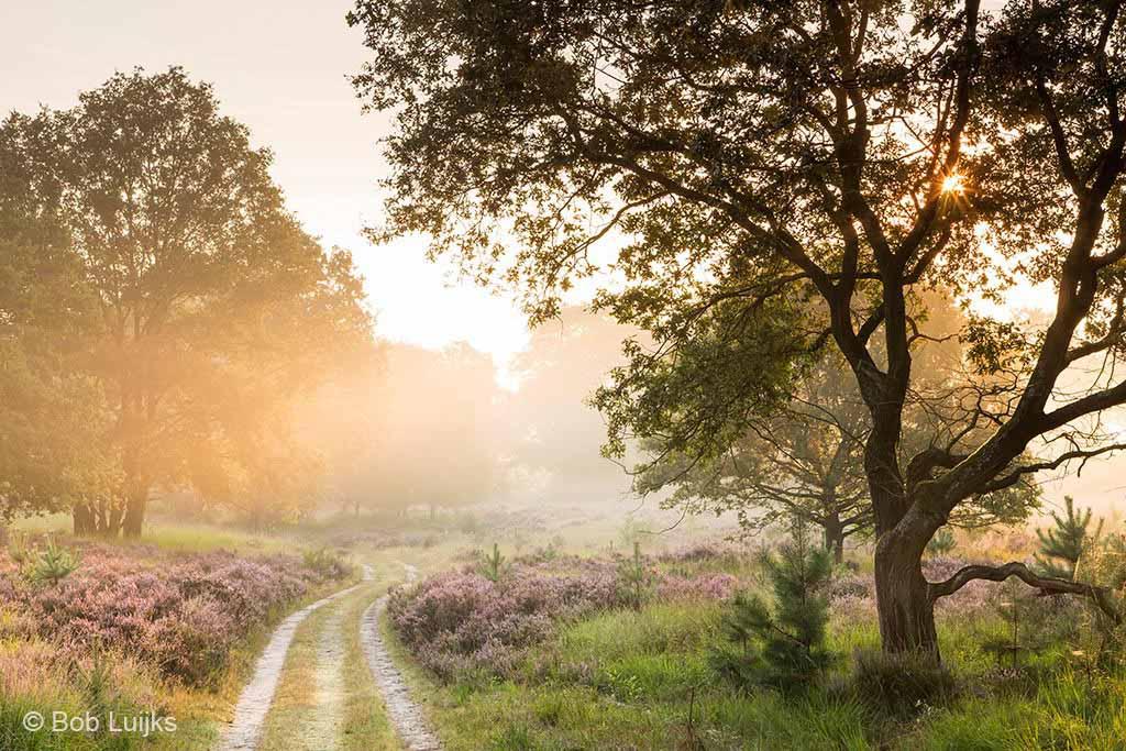 Maand van het onverharde pad