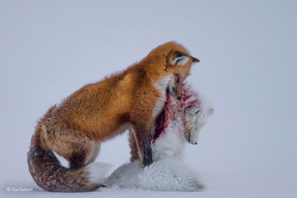 Kun je de titel 'Wildlife photographer of the Year' kopen?