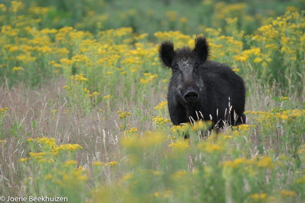 Gebieden fotograferen Natuurfotografie.nl:Radio Kootwijk