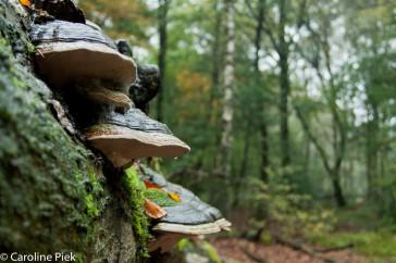 paddenstoelen 5